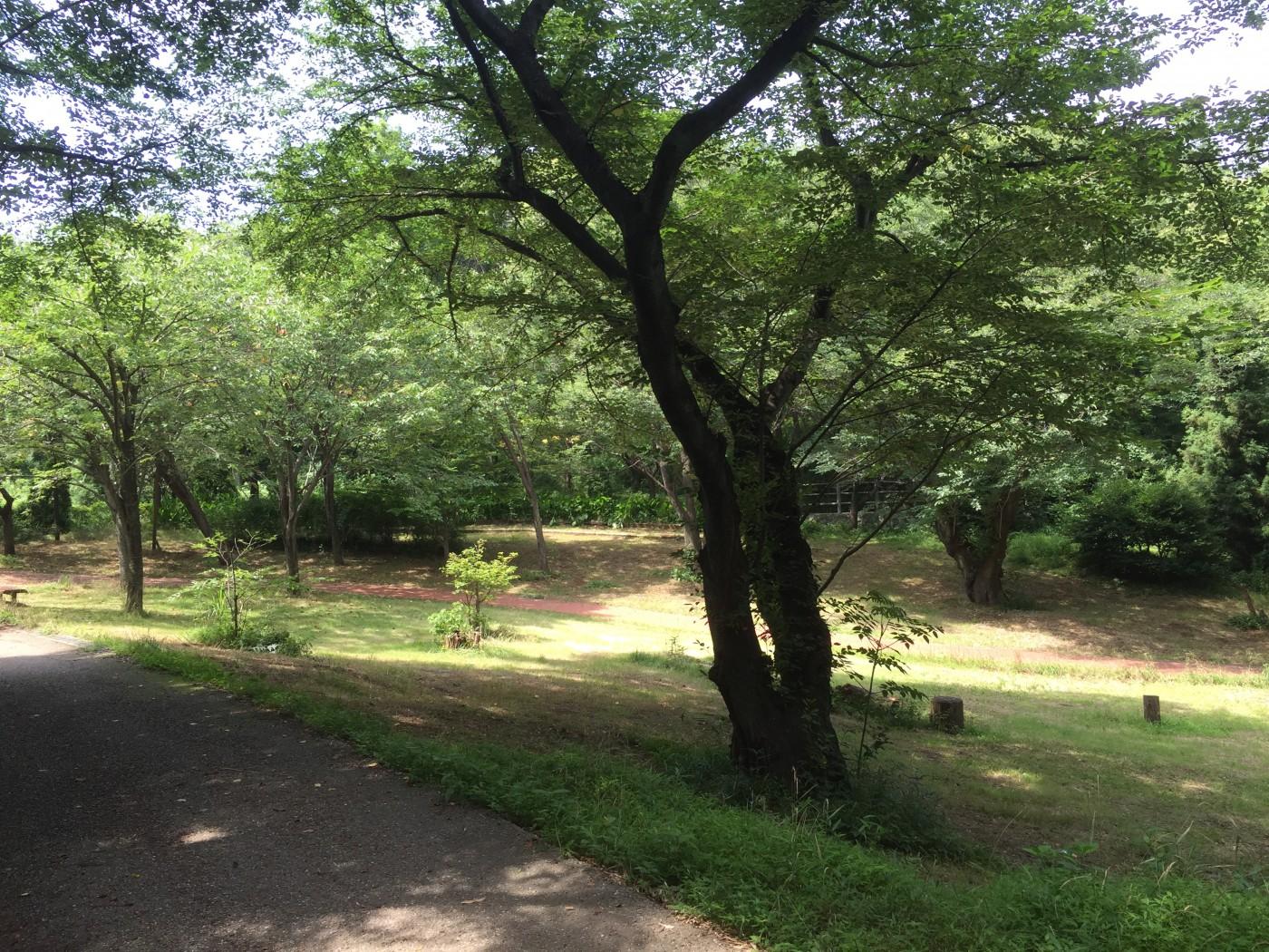 公園風景①