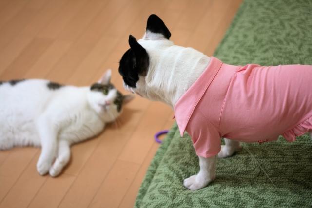 ペットと住みたい…でもマンションでペットって飼っていいの?